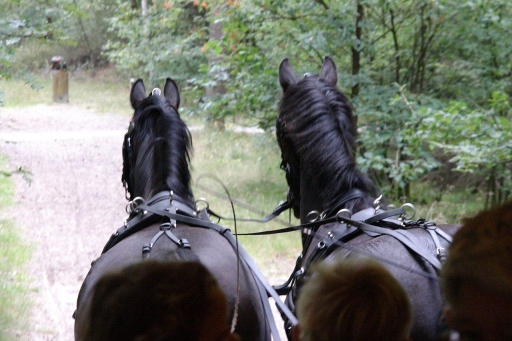 Foto van 2 paarden. De Paarden trekken een huifkar.